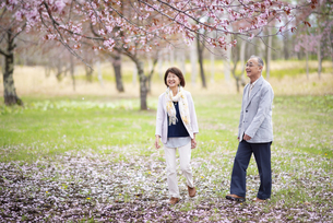 桜の中を歩くシニアカップルの写真素材 [FYI04675049]