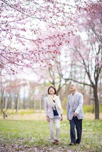 桜の中を歩くシニアカップルの写真素材 [FYI04675050]