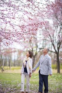 桜を見上げるシニアカップルの写真素材 [FYI04675051]