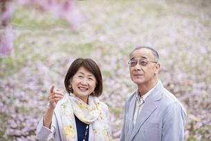 桜を見上げるシニアカップルの写真素材 [FYI04675053]