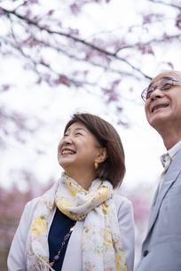 桜を見上げるシニアカップルの写真素材 [FYI04675054]