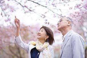 桜の前で寄り添うシニアカップルの写真素材 [FYI04675057]