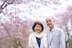桜の前で寄り添うシニアカップルの写真素材 [FYI04675059]