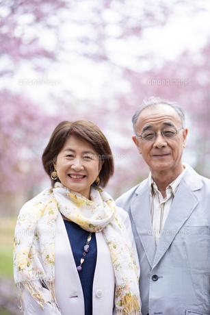 桜の前で寄り添うシニアカップルの写真素材 [FYI04675061]