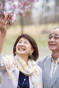 桜を見上げるシニアカップルの写真素材 [FYI04675062]