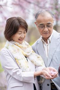 桜の花を見つめるシニアカップルの写真素材 [FYI04675065]