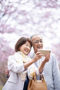 桜の前でスマホを見るシニアカップルの写真素材 [FYI04675074]