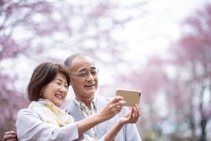桜の前でスマホで写真を撮るシニアカップルの写真素材 [FYI04675075]