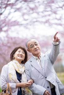 桜を見つめるシニアカップルの写真素材 [FYI04675076]