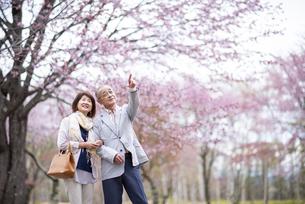 桜を見つめるシニアカップルの写真素材 [FYI04675077]