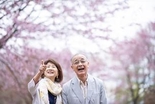 桜を見つめるシニアカップルの写真素材 [FYI04675079]