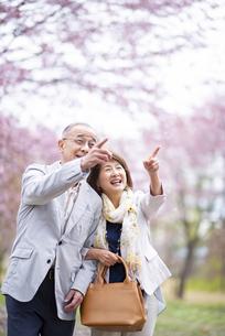 桜の花を指差すシニアカップルの写真素材 [FYI04675081]