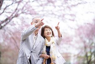 桜の花を指差すシニアカップルの写真素材 [FYI04675082]