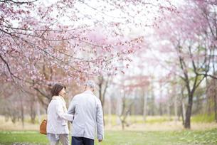桜の中を歩くシニアカップルの写真素材 [FYI04675086]