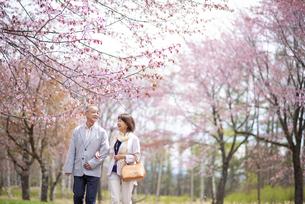 桜の中を歩くシニアカップルの写真素材 [FYI04675092]