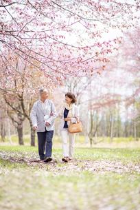 桜の中を歩くシニアカップルの写真素材 [FYI04675099]