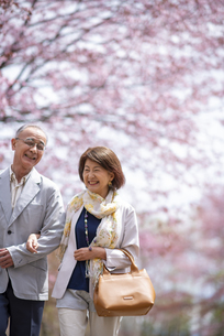 桜の中を歩く笑顔のシニアカップルの写真素材 [FYI04675103]