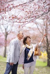 桜を見上げるシニアカップルの写真素材 [FYI04675105]
