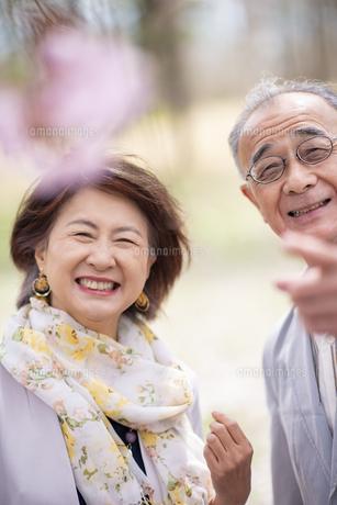 桜を見つめるシニアカップルの写真素材 [FYI04675108]