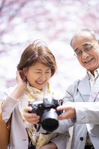 桜の中でカメラを見るシニアカップルの写真素材 [FYI04675110]