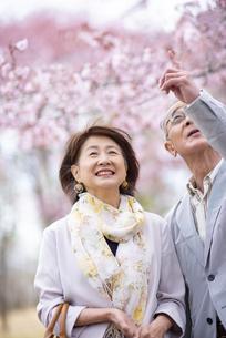 桜を見上げるシニアカップルの写真素材 [FYI04675113]