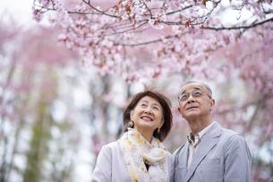 桜を見上げるシニアカップルの写真素材 [FYI04675116]