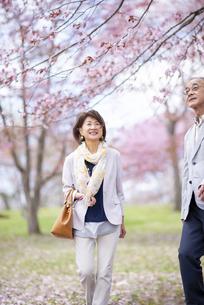 桜の中を歩くシニアカップルの写真素材 [FYI04675171]