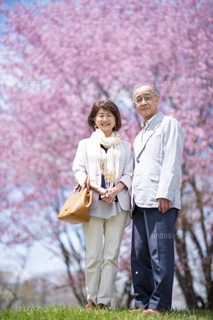 桜の前に立つシニアカップルの写真素材 [FYI04675172]