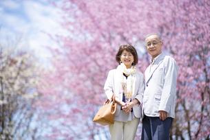 桜の前に立つシニアカップルの写真素材 [FYI04675173]