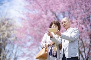 桜の前で自撮りをするシニアカップルの写真素材 [FYI04675174]