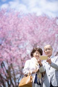 桜の前で自撮りをするシニアカップルの写真素材 [FYI04675175]