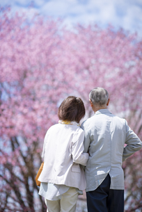 桜を見つめるシニアカップルの後ろ姿の写真素材 [FYI04675177]