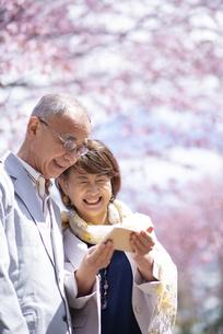 桜の前でスマホを見るシニアカップルの写真素材 [FYI04675182]