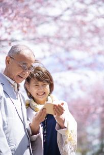 桜の前でスマホを見るシニアカップルの写真素材 [FYI04675183]