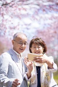 桜の前で自撮りをするカップルの写真素材 [FYI04675185]