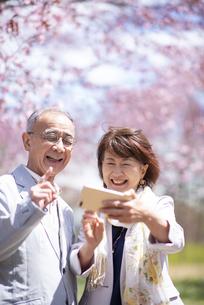 桜の前で自撮りをするシニアカップルの写真素材 [FYI04675186]