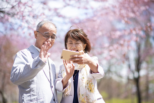 桜の前で自撮りをするカップルの写真素材 [FYI04675187]