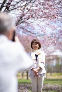 桜の前で写真を撮るカップルの写真素材 [FYI04675188]