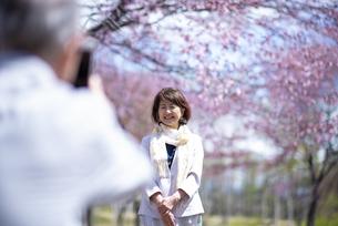 桜の前で写真を撮るカップルの写真素材 [FYI04675189]