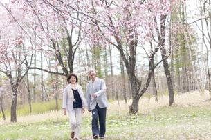 桜の中を歩くシニアカップルの写真素材 [FYI04675190]