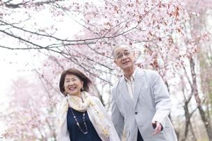 桜の中を歩くシニアカップルの写真素材 [FYI04675193]