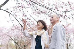 桜を見上げるシニアカップルの写真素材 [FYI04675194]