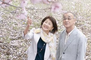 桜を見上げるシニアカップルの写真素材 [FYI04675195]