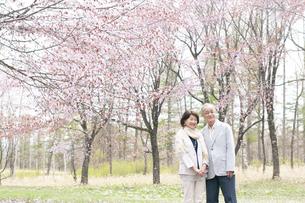 桜の前で寄り添うシニアカップルの写真素材 [FYI04675196]
