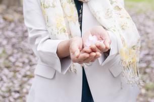 桜の花を手に乗せる女性の写真素材 [FYI04675197]