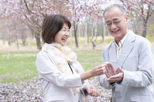 桜の花を見せる女性の写真素材 [FYI04675198]