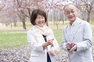 桜の花を見せる女性の写真素材 [FYI04675199]