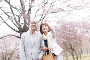 桜を見上げるシニアカップルの写真素材 [FYI04675206]