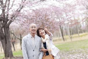 桜を見上げるシニアカップルの写真素材 [FYI04675207]