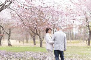 桜の中を歩くシニアカップルの写真素材 [FYI04675209]